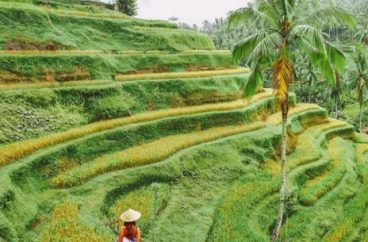 Travel Vaccines: South East Asia